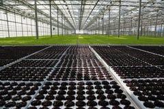 Молодые заводы растя в очень большом заводе Стоковое фото RF