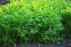 Молодые листья зеленого цвета стоковые изображения