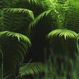 Молодые листья папоротника начинают раскрывать макрос Стоковая Фотография