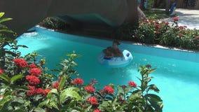 Молодые красивые женщины и младенец плавают на кругах заплывания на медленном реке женщина моет младенца сток-видео