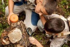 Молодые мальчики на располагаться лагерем расследовали природу используя увеличивая gla Стоковые Фото