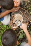 Молодые мальчики на располагаться лагерем расследовали природу используя увеличивая gla Стоковая Фотография RF