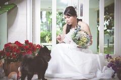 Молодые невеста и собака Стоковые Фото