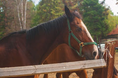 молодые лошади на выгоне Стоковое Фото