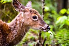 Молодые олени идя в лес есть листья в поле Стоковые Фото