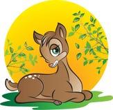 Молодые олени Стоковые Фото