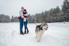 Молодые пары при осиплая собака идя в зиму паркуют, человек и женщина играя и имея потеху с собакой Стоковые Изображения RF