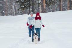 Молодые пары при осиплая собака идя в зиму паркуют, человек и женщина играя и имея потеху с собакой Стоковое Изображение
