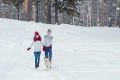 Молодые пары при осиплая собака идя в зиму паркуют, человек и женщина играя и имея потеху с собакой Стоковое фото RF