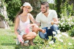 Молодые пары садовничая совместно Стоковая Фотография RF