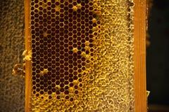 Молодые пчелы, мужские трутни на рамке меда Стоковые Фотографии RF