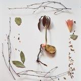 Молодые росток манго, ветви и цветок 2 clivia Стоковая Фотография RF