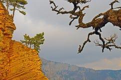 Молодые сосны на краю скалы и старой ветви Стоковые Фотографии RF