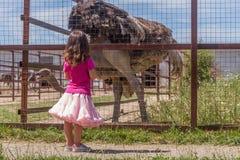 Молодые счастливые усмехаясь девушки ребенка подавая страус эму на ферме птицы Стоковые Изображения