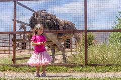 Молодые счастливые усмехаясь девушки ребенка подавая страус эму на ферме птицы Стоковая Фотография RF