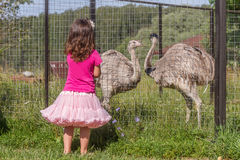 Молодые счастливые усмехаясь девушки ребенка подавая страус эму на ферме птицы Стоковое фото RF