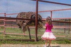 Молодые счастливые усмехаясь девушки ребенка подавая страус эму на ферме птицы Стоковые Изображения RF