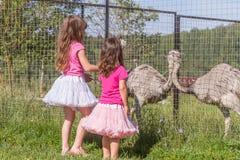Молодые счастливые усмехаясь девушки ребенка подавая страус эму на ферме птицы Стоковая Фотография