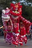 Молодые танцоры льва стоковые фотографии rf