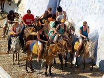 Молодые туристы на ослах, Santorini Стоковые Изображения