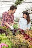 Молодые усмехаясь флористы человек и женщина работая в парнике Стоковые Изображения