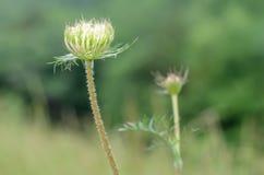 Молодые цветки в поле Стоковые Фото