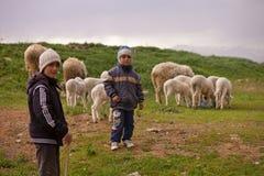 Молодые чабаны с их стадом Стоковая Фотография
