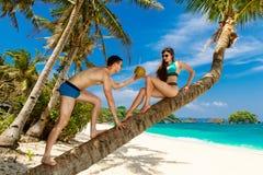 Молодые любящие пары на пальме на тропическом пляже тропическо стоковое фото rf