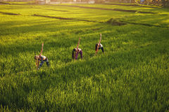 Молодые люди работая в ферме Стоковое фото RF