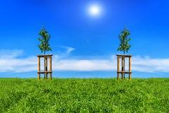2 молодых дерева на холмистом луге Стоковые Фото