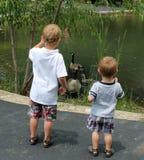 2 молодых мальчика смотря гусынь плавая в пруде Стоковая Фотография RF