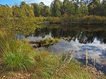 Молчаливое река осени Стоковая Фотография