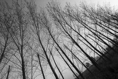 Молчаливые древесины Стоковое Изображение RF