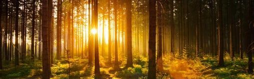 Молчаливый лес весной с красивым ярким солнцем излучает стоковые фотографии rf