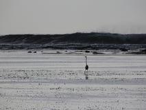 Молчаливый пляж с облаками стоковое фото rf
