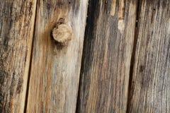 Моллюск Дэйв, который выросли в баках Стоковое Фото