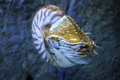 Моллюск Стоковые Фото