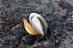 Моллюск Стоковое Фото