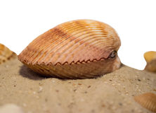Моллюск стоковое изображение rf