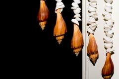 Моллюск Стоковая Фотография RF