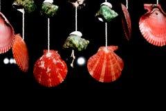 Моллюск Стоковые Изображения
