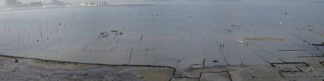 Моллюск Carril Стоковое Изображение RF