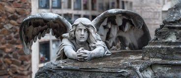 Моля ангел Стоковые Изображения