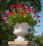 Мраморная ваза Стоковая Фотография