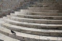 мраморные славные шаги вихруна Стоковые Изображения RF