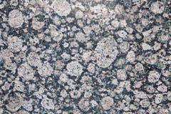 мрамор Стоковое Изображение