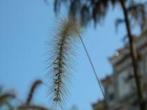 Мудрый пошатывать в ветре стоковые фотографии rf