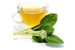 Мудрый чай в чашка изолированном на белой предпосылке стоковые фото
