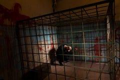Мужская жертва заключенная в турьму в клетке металла с кровью splattered w Стоковое фото RF