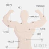 мужская иллюстрация спортзала мышцы части Стоковая Фотография